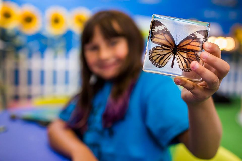 Explore the Insect World!