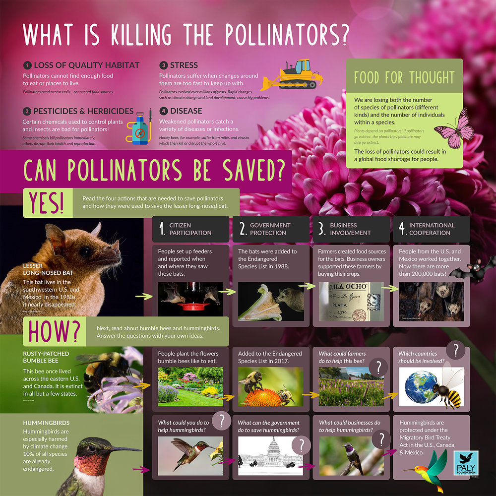 What Is Killing The Pollinators?