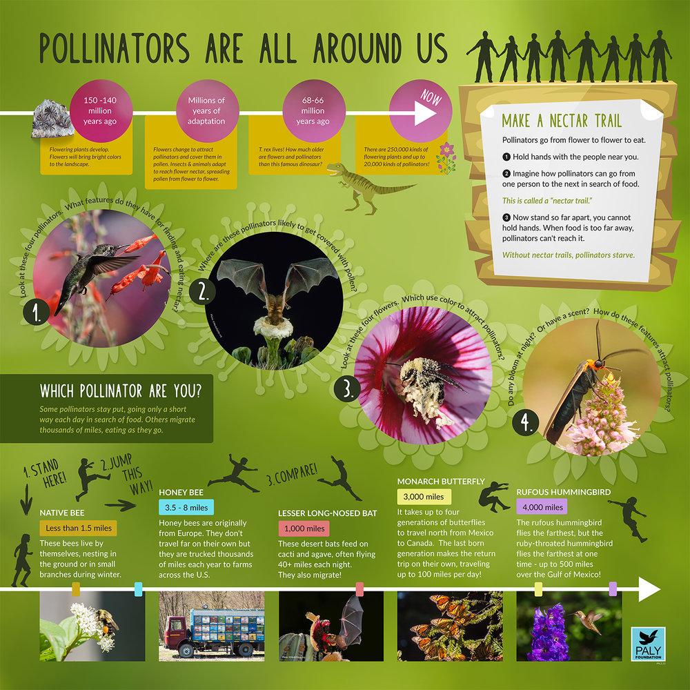 Pollinators Are All Around Us