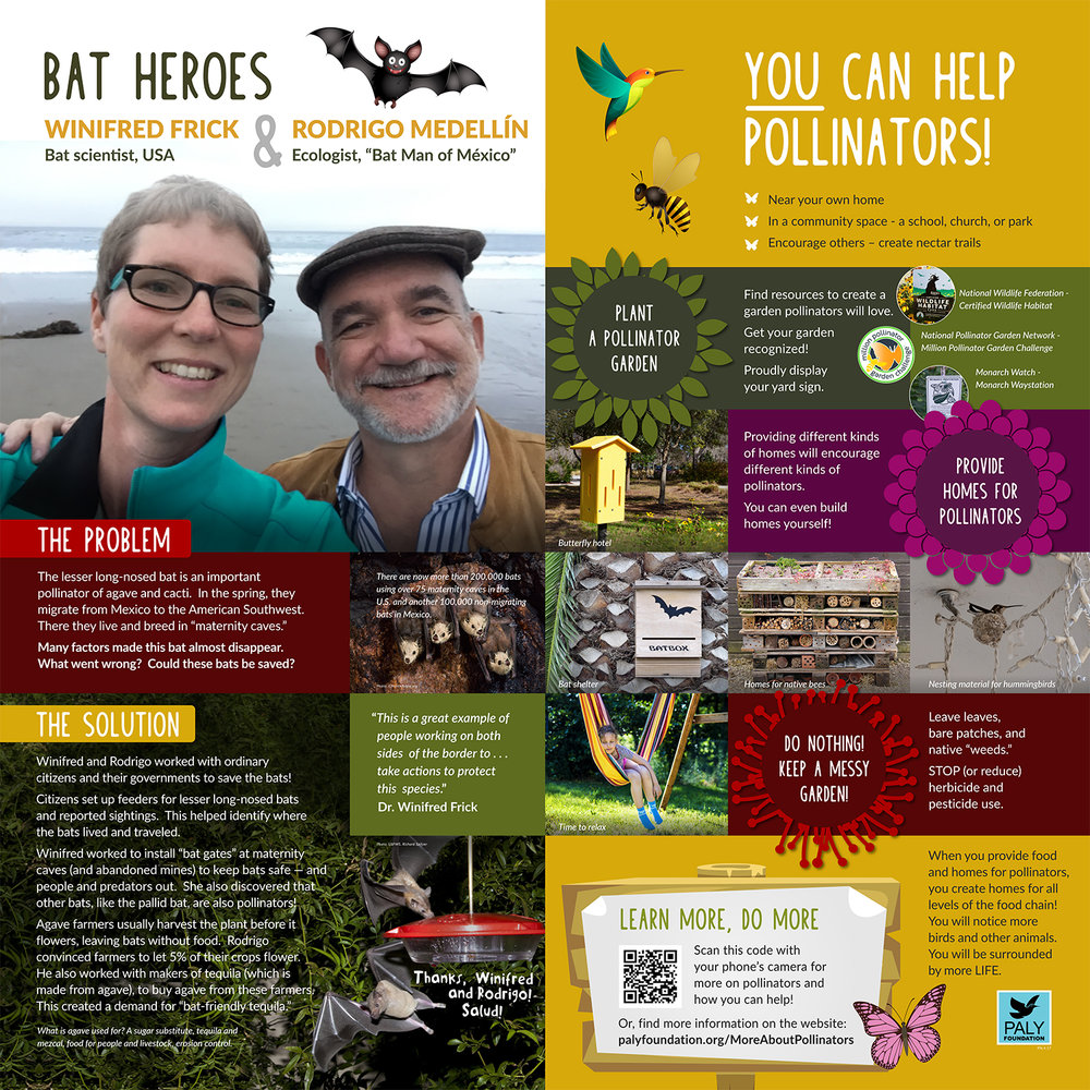 Bat Heroes and How You Can Help!